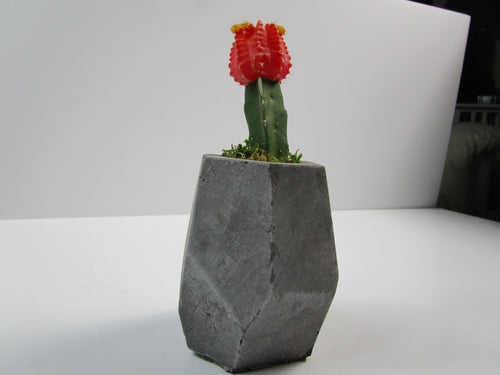 Best Home Decor Online. Geometric Concrete Planter, Concrete Pot, Hand Made. FREE SHIPPING!