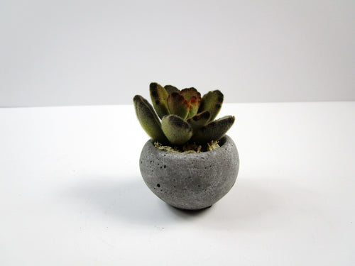 Unique Garden Decor Concrete Cylindrical Pot,  Hand Made Home Decor. FREE SHIPPING!