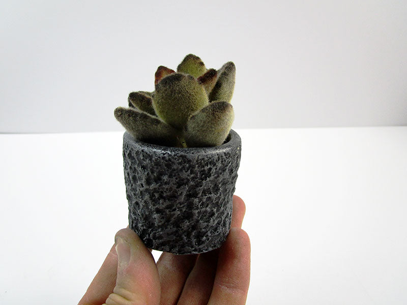 Mini Planter Retro Style. Get This Cutie Concrete Cylindrical Pot For Your Mini Garden. Hand Made. Retro Design. FREE SHIPPING!