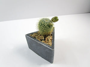 Unique Home Decoration Item. Triangle Concrete Planter, Concrete Pot Hand Made. FREE SHIPPING!