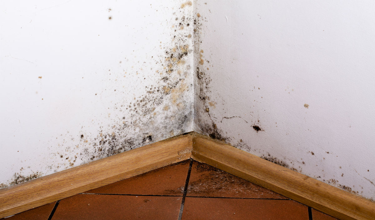 4 Easy Ways To Keep Your Home Mold-Free This Monsoon