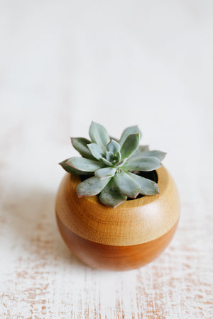 Dóro Treeó Sphere, Succulent, Natural Wood, Handmade Pot