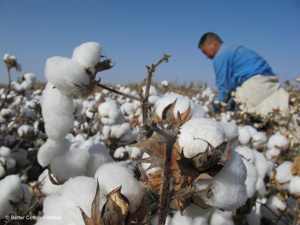 BCI - BETTER COTTON INITIATIVE