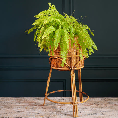 Rattan and Bamboo Plant Stand