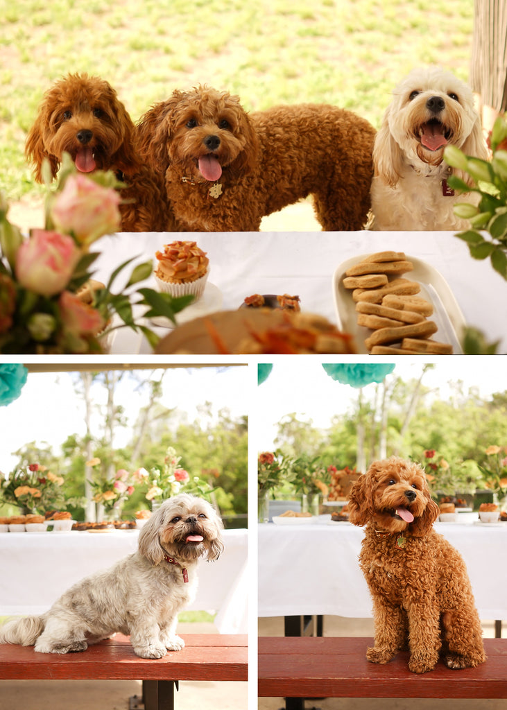 Jaycee, Charlie and Jazzy giving their smile of approval for all the treats and Choco and Charlie giving us their best model pose!