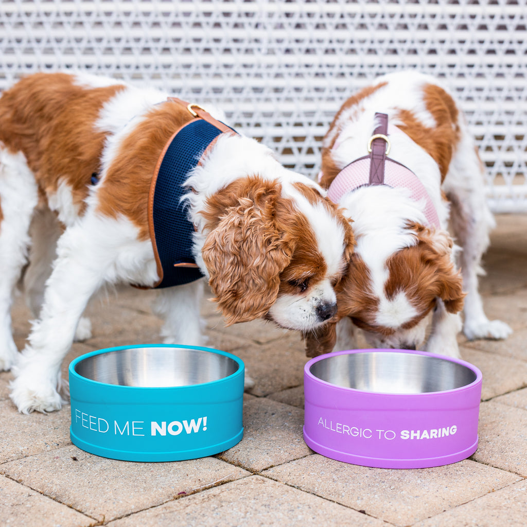 Allergic to sharing - Cat & Dog Bowl