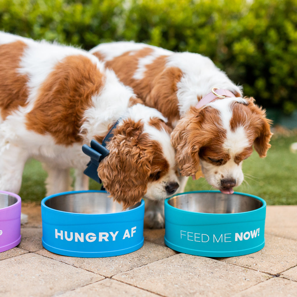 Feed Me Now - Cat & Dog Bowl