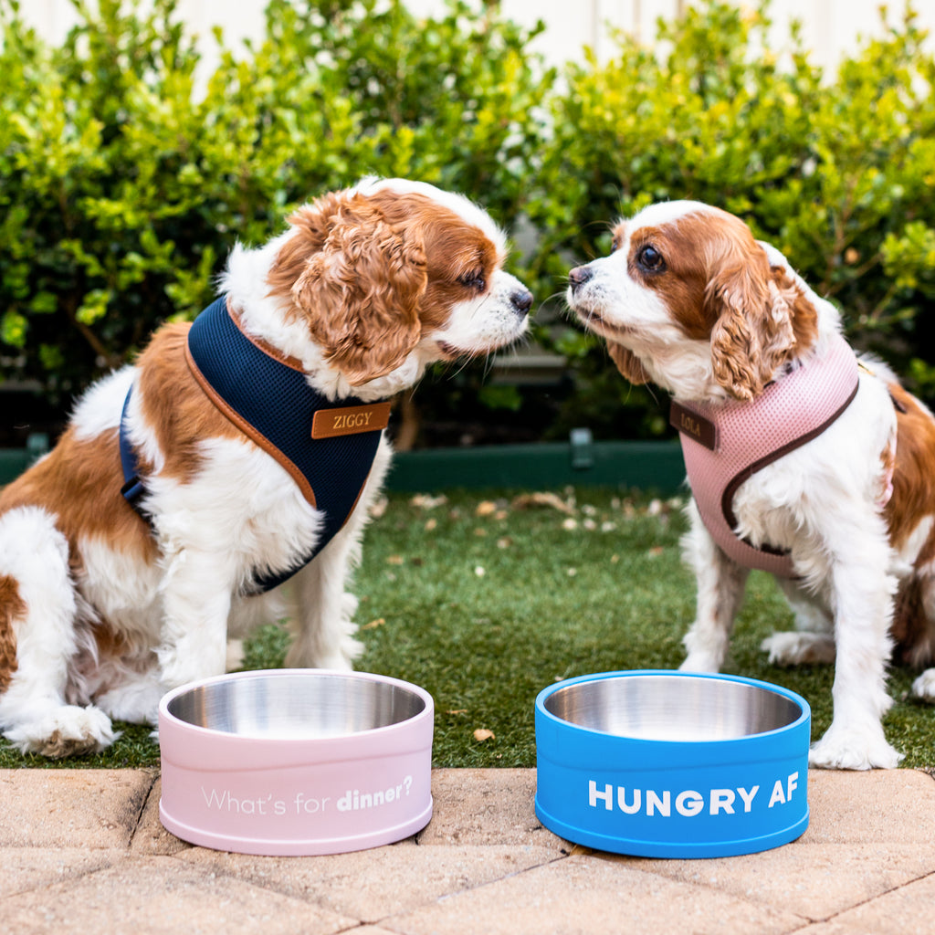 HUNGRY AF - Cat & Dog Bowl