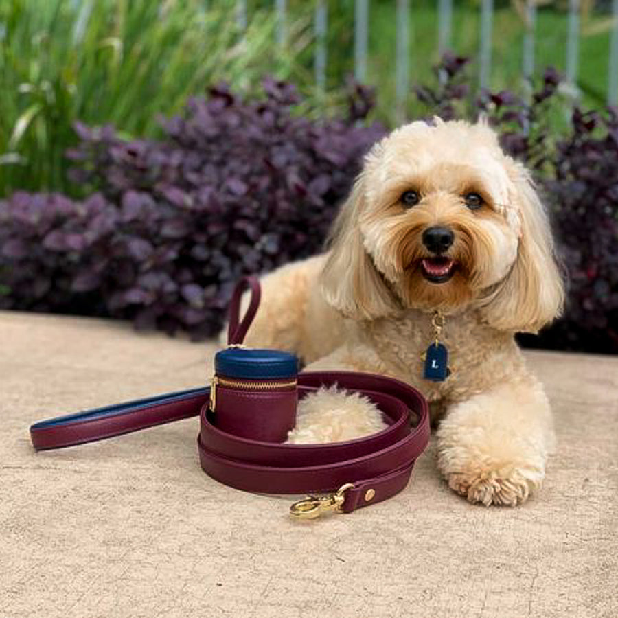 Louis x Tommy & Bella Dog Collar