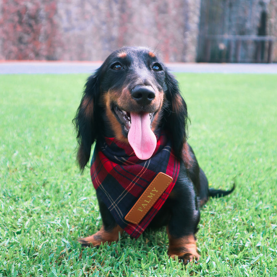Navy & Red Tartan Dog Bandana