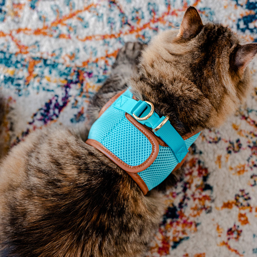Sky Blue Cat Harness with Tan Trim