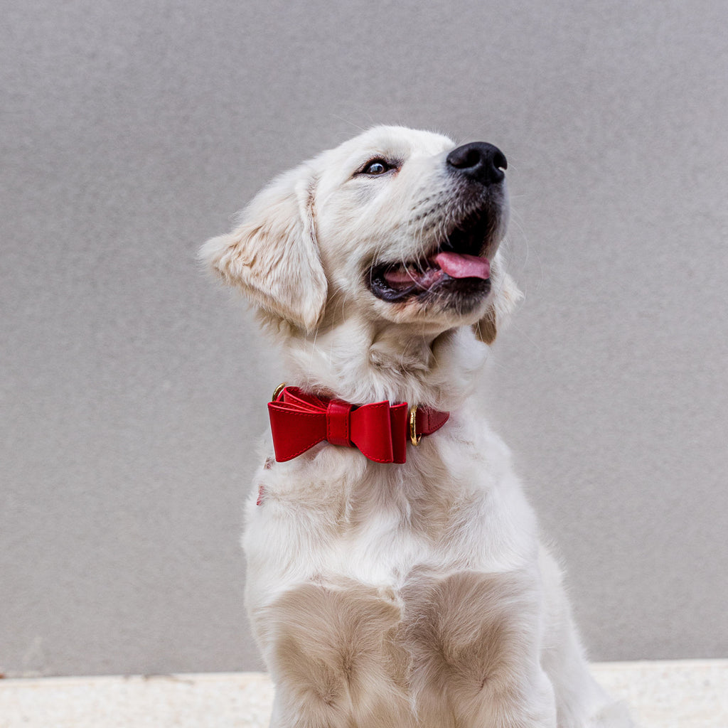 Red Leather Dog Bow Tie