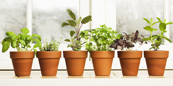 How to grow kitchen garden?