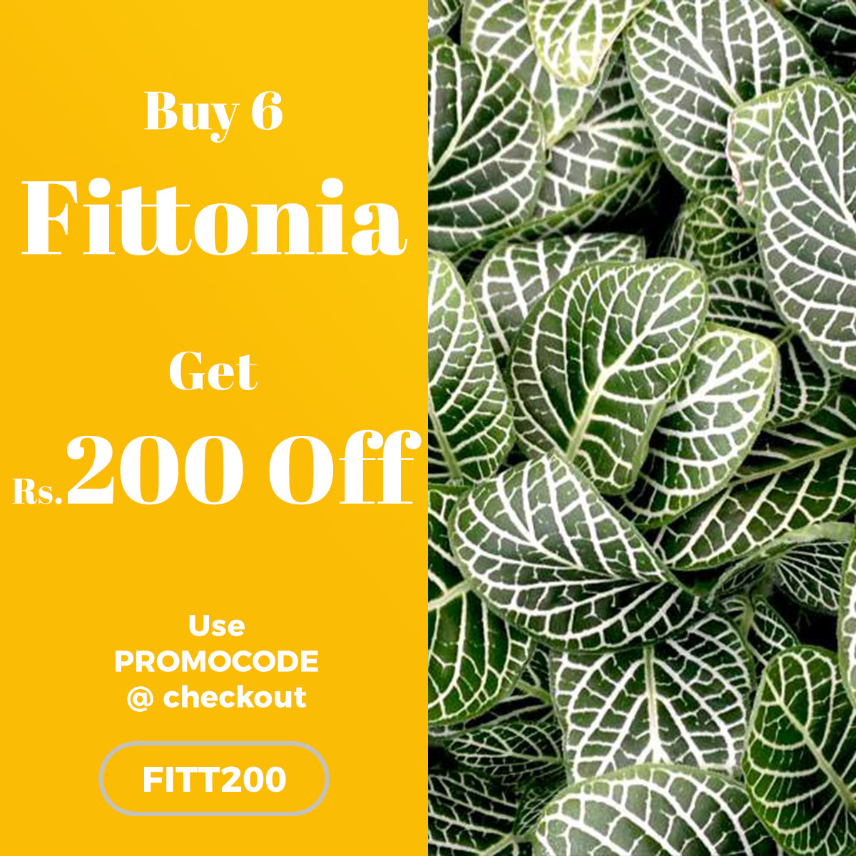 Buy 6 Fittnoia and get Rs.200 OFF