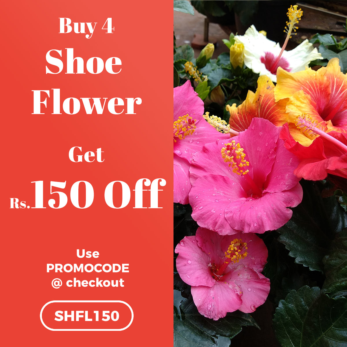Buy 4 Shoe Flower and get Rs. 150 OFF