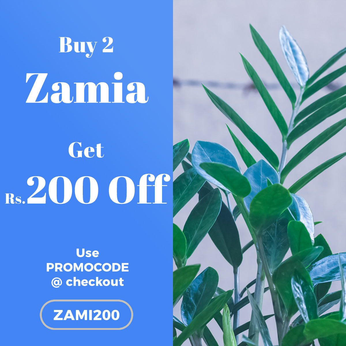 Buy 2 Zamia Plant and get Rs.200 OFF