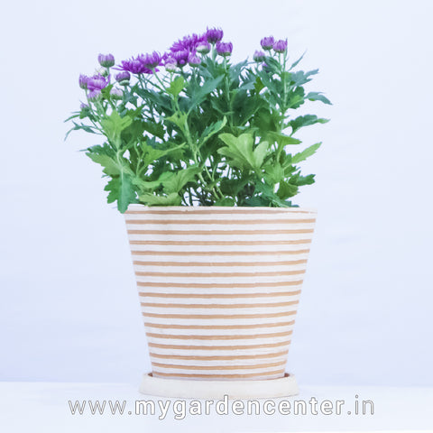 Polystone Planter with Saucer
