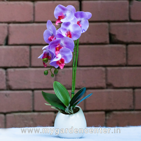 Artificial Moth-Orchid Arrangement