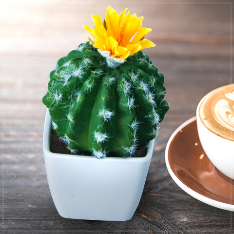Artificial Moon Cactus Flowers Plant