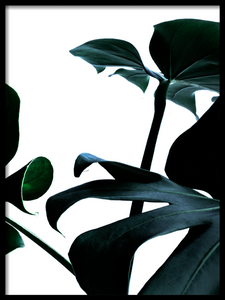 Close monstera II Poster