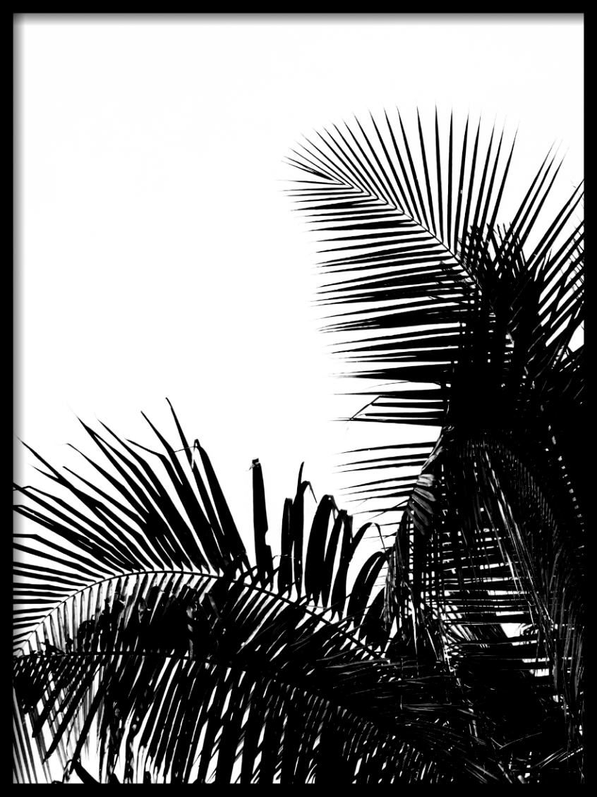 Black palm leaf II Poster