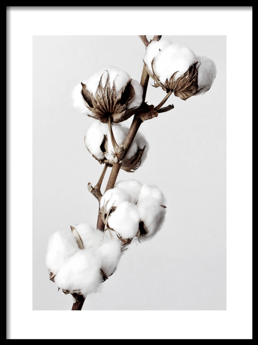 Cotton branch Poster - Høst design