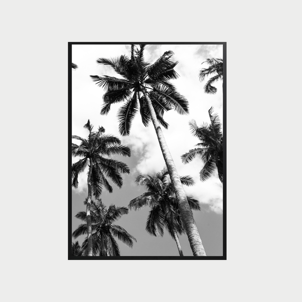 Poster - Palm II