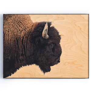 Bison Print on Maple with Steel Frame