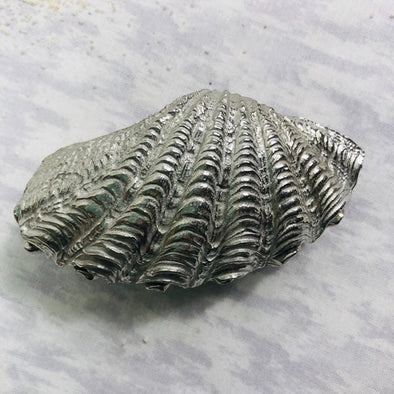 Pewter Fluted Clamshell Treasure Box