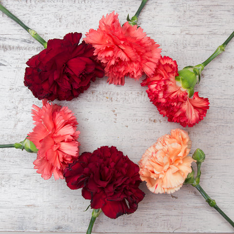 A ring of pink, red, and white carnations