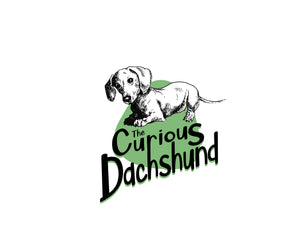 Curious Dachshund with Tilted Head with Green Background Logo
