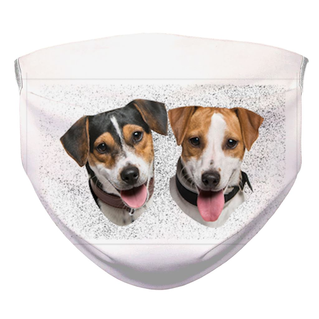 Beagle mask test