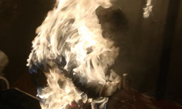 Sons Of Anarchy: Dawn Trager Burned Body-4