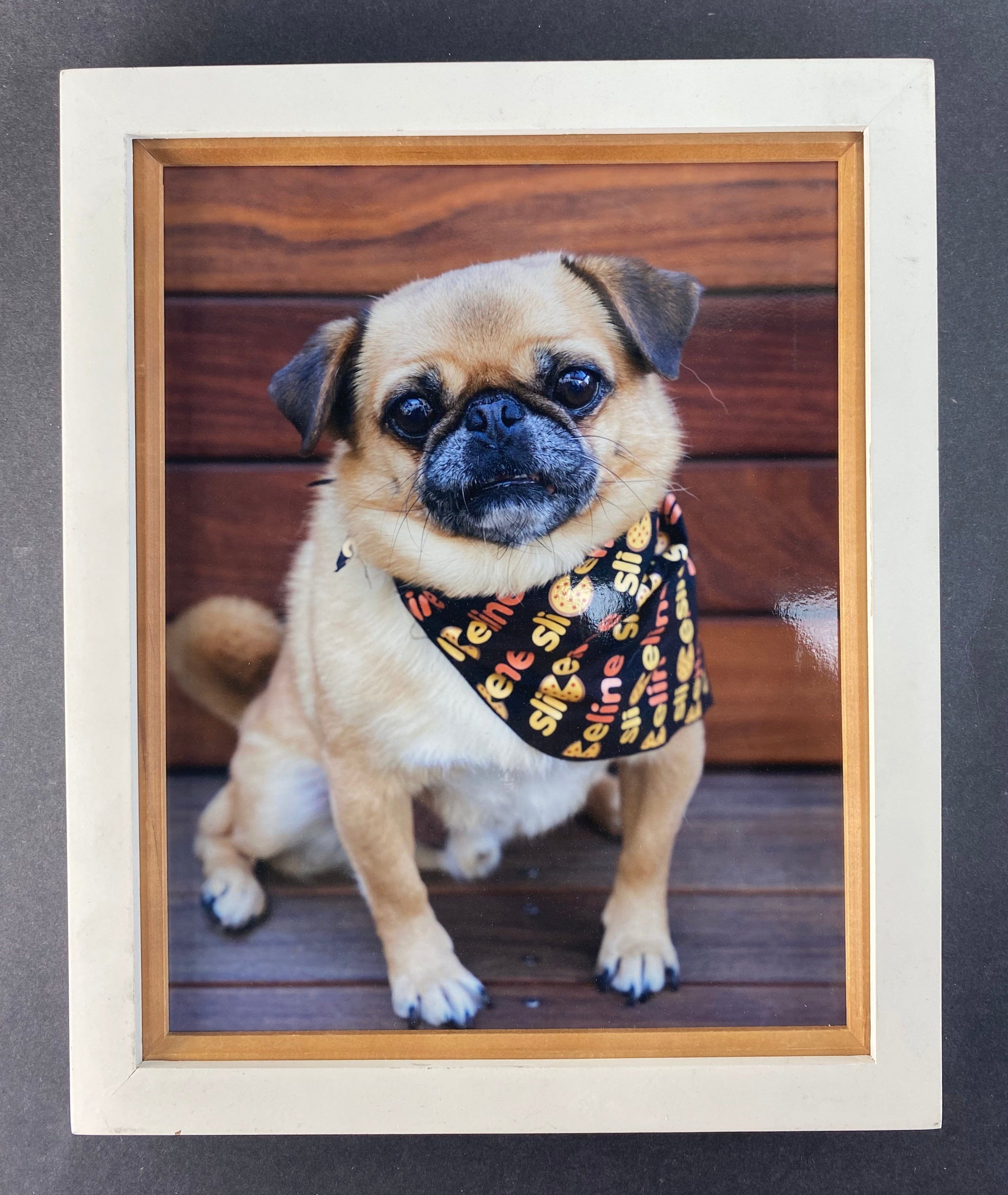 SILICON VALLEY: Sliceline Kira's Pup Framed Photo