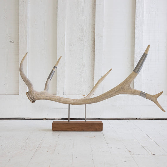 Elk Antler Sculpture - Natural with wire wrap