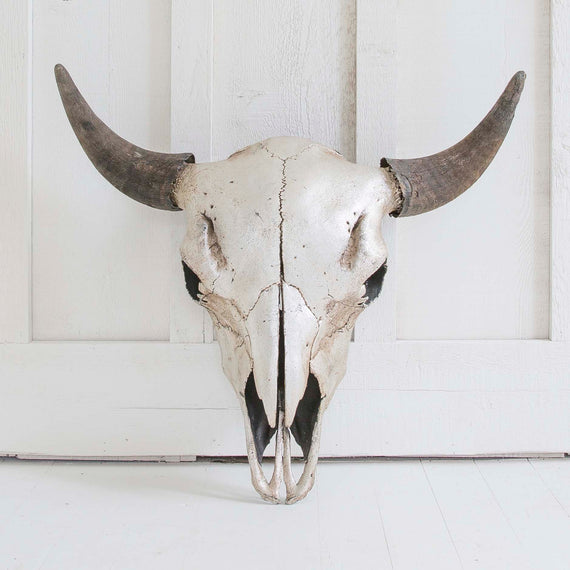Silver Leaf Bison Skull, Black Horns