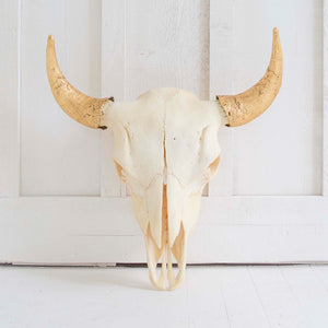 Natural Bison Skull, Gold Horns