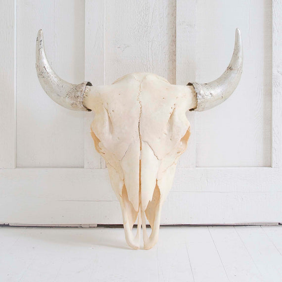 Natural Bison Skull, Silver Horns