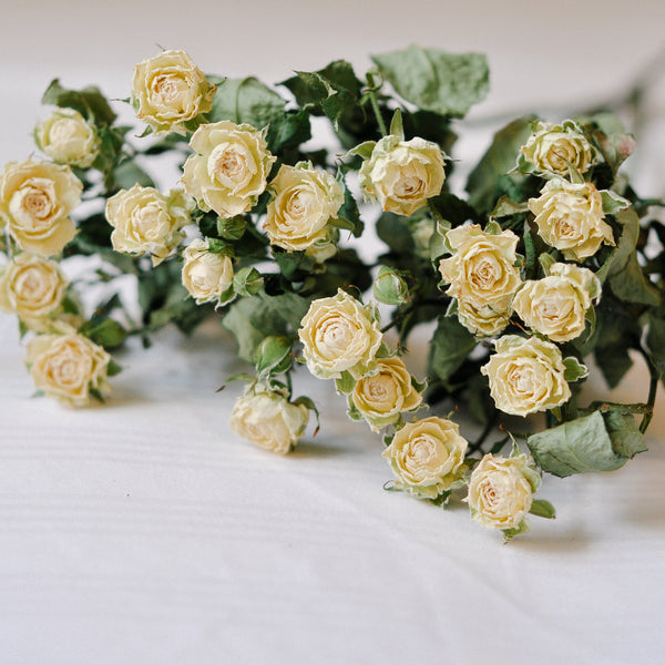 Dried Spray Roses - white