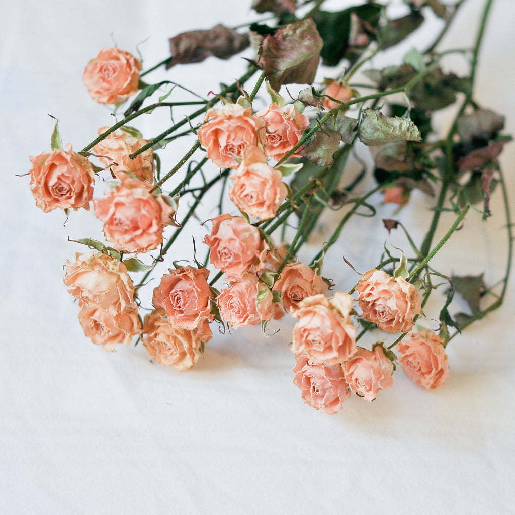 Dried Spray Roses - champagne/blush