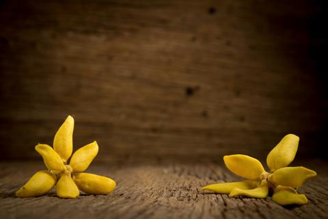 Ylang Ylang Essential Oil - Fertility Essential Oils