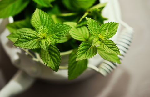 Peppermint - Hormone Balance Essential Oil