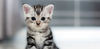5 Tips when bringing a new kitten home
