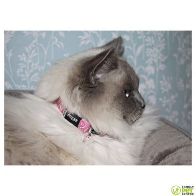 Rogz SparkleCat Pin Buckle Collar
