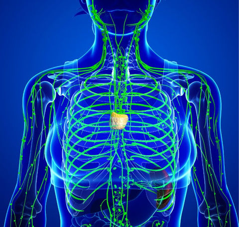 LIVE, ONLINE Lymphatic Yoga Class:  March 27th, 9am, $10