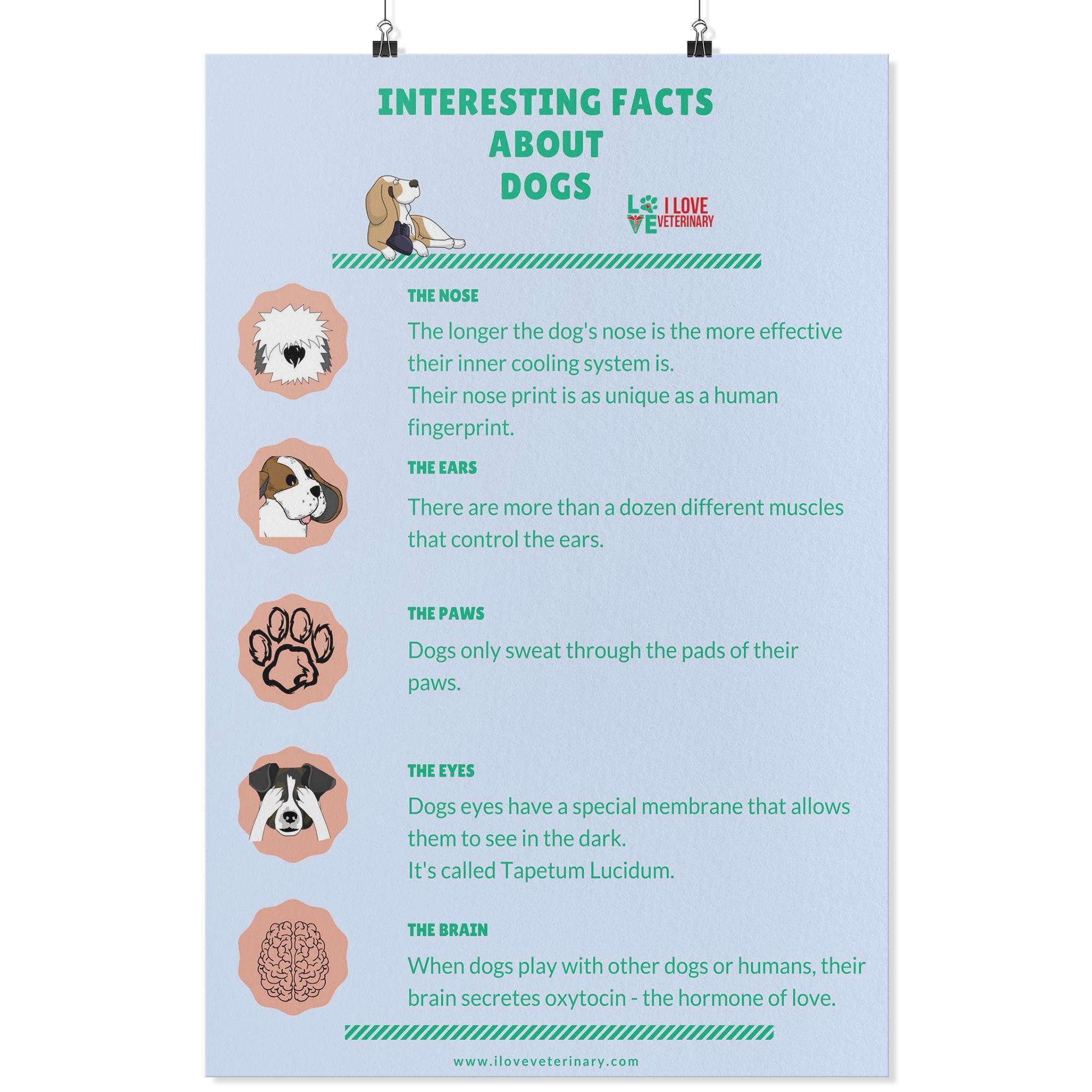 Interesting Facts about Dogs Poster-Posters 2-I love Veterinary