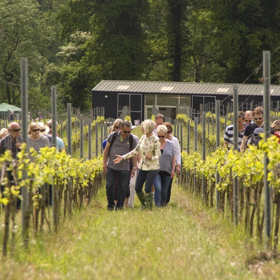 Vineyard Tour & Tasting Voucher