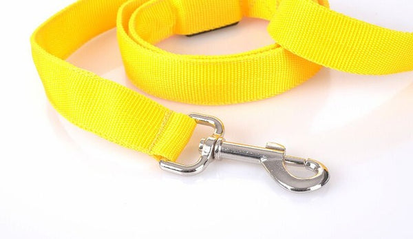NEW! BrightDog™ USB Rechargeable LED Dog Leash