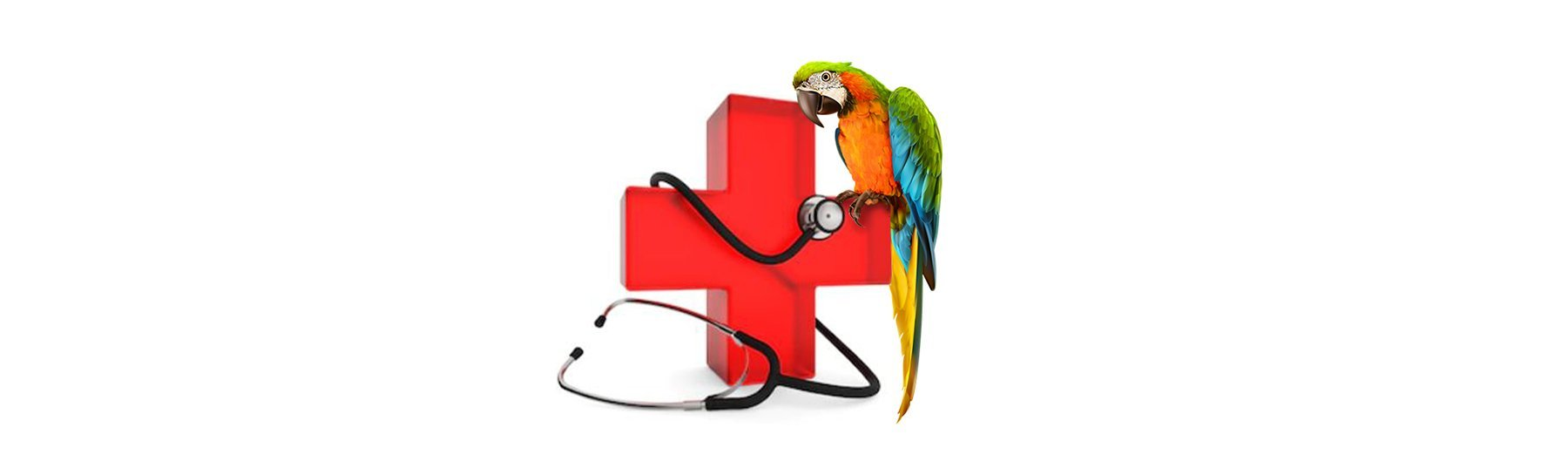 Caring for a Sick Bird | New York Bird Supply