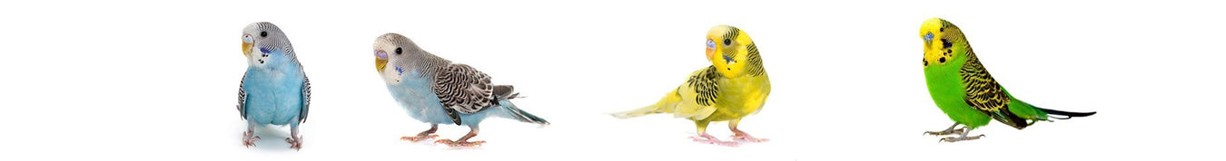 Small Bird Toys | New York Bird Supply